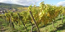 Journée Vin Nouveau