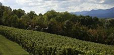 Weinlehrpfad von Wangen