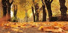 Salon d'automne shopping, gastronomie et bien-être