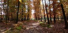 Circuit découverte En forêt de Weitbruch