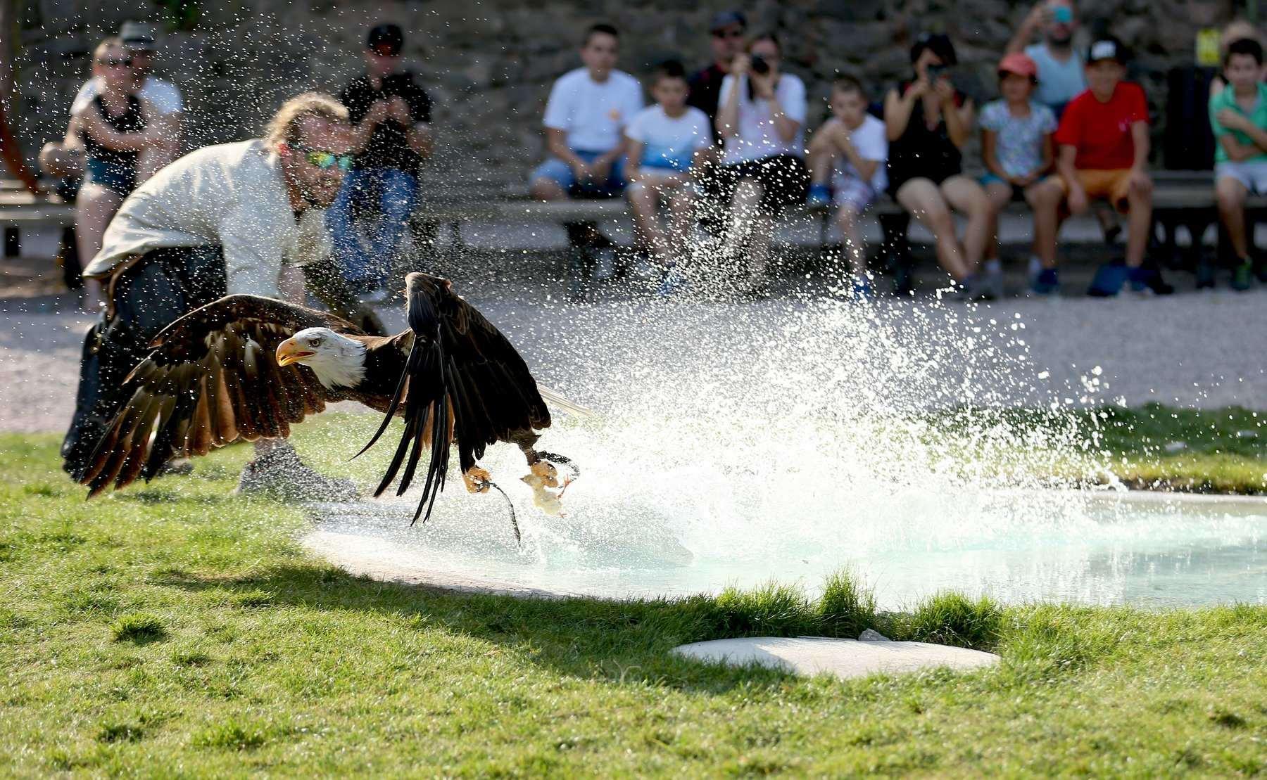 La volerie des aigles