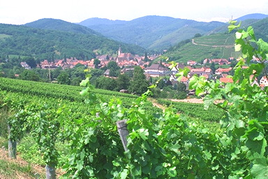 Winemakers, vineyards and charming villages