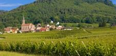 Alsace and its magnificent vineyards