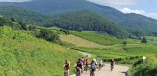 Tour of the Alsace vineyard
