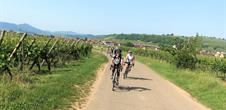 The Alsace vineyard and the Piedmont Vosges on the EuroVelo Route 5 in 3 steps