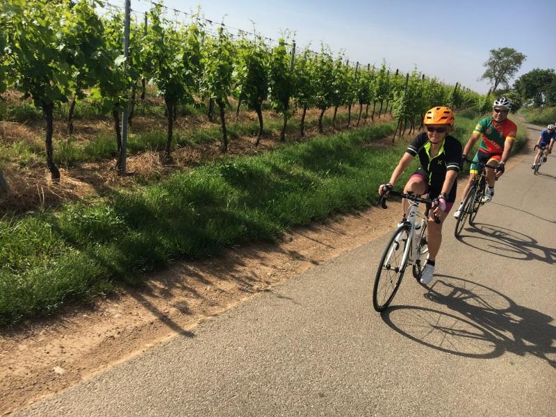 Le Vignoble d'Alsace et le Piémont Vosgien sur l'EUROVELO Route 5 en 3 Etapes