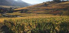 Féérique Route des Vins d'Alsace en 4 Etapes