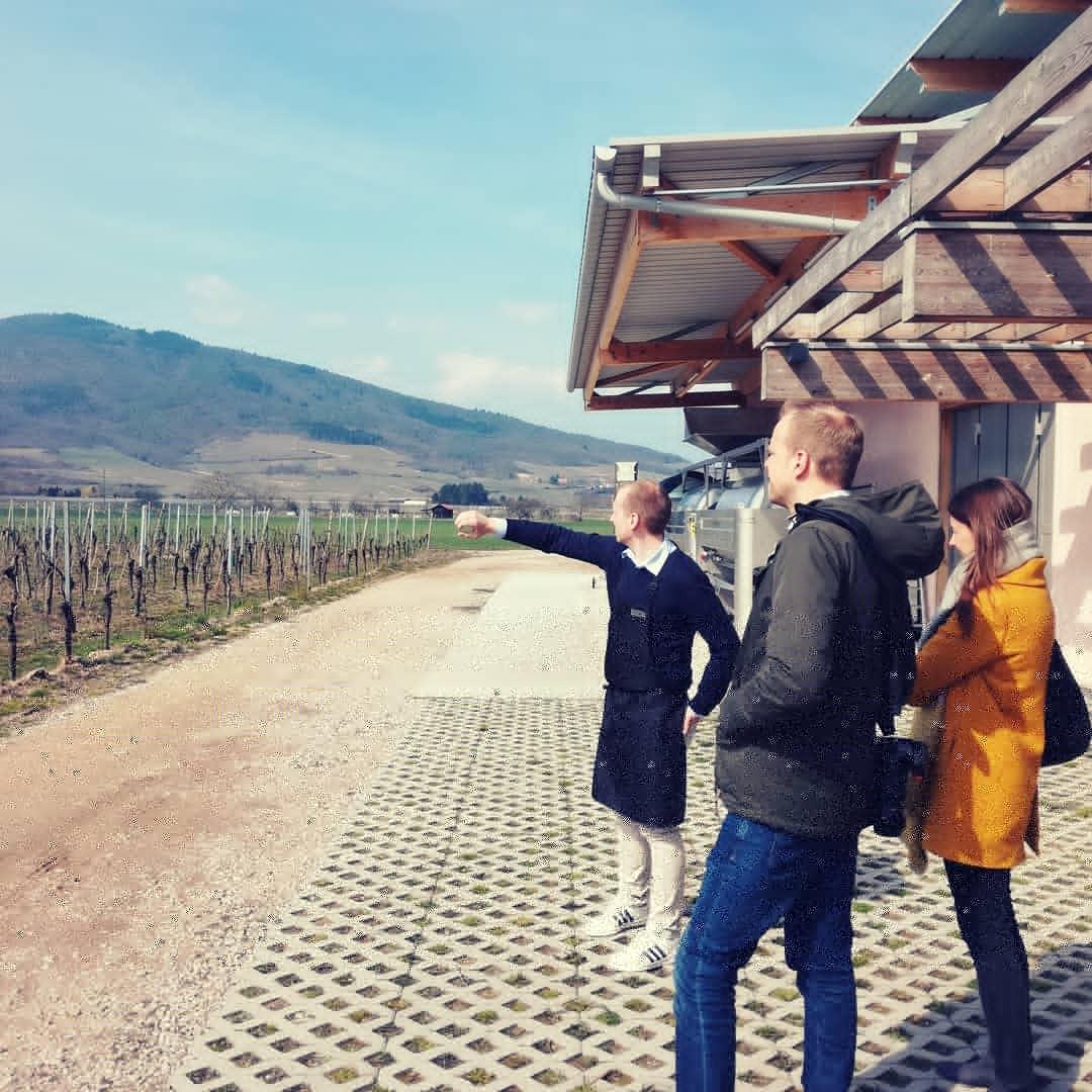 Wine tour in a vintage VW bus: Half-day tour !