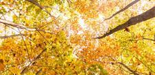 Il était un bois... mystérieuse forêt sainte !
