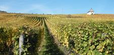 BL921 - Wijngebied van Koning Dagobert