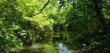 The Erstein polder