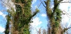 Les sites naturels dans le Grand Ried
