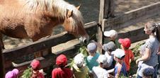 Nourrissage des animaux à la ferme éducative AGF