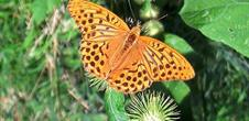 Sentier des papillons