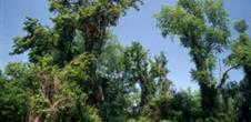 L'île de Rhinau, une petite jungle rhénane