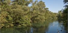 La réserve naturelle nationale de la Forêt d'Erstein