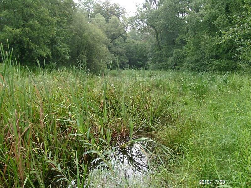 Réserve naturelle nationale de la forêt d'Erstein : la Sommerley