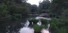 Parc forestier du Rhinwald