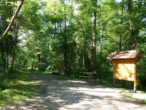 Sentier botanique : forêts Riediennes