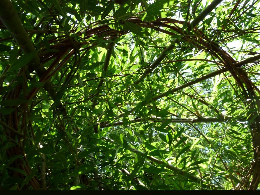Garden of the 5 senses