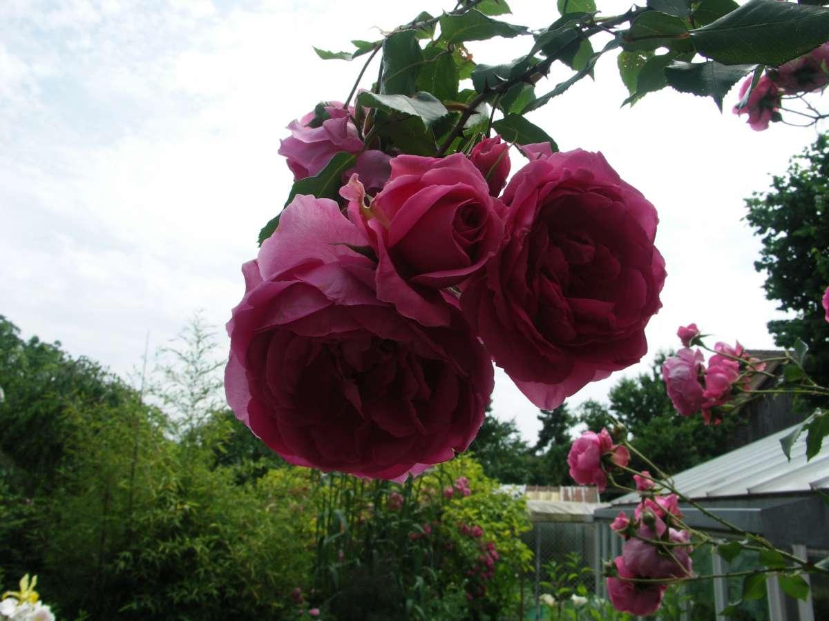 Le jardin de pierrette diebolsheim for Ambiance jardin diebolsheim