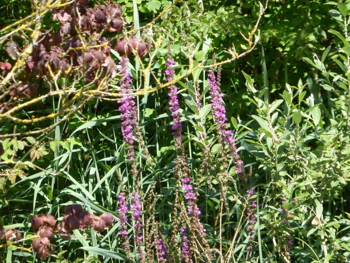 Alsace Écotourisme – Embarquez pour la jungle rhénane