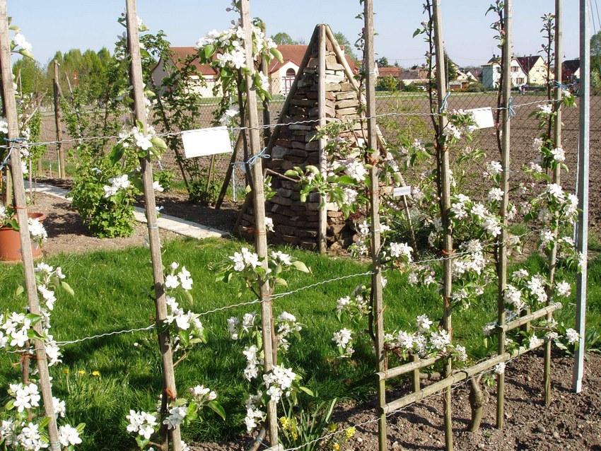 Obst Schule Nordhouse - Hipsheim
