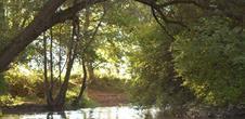 Réserve naturelle de l'île de Rhinau