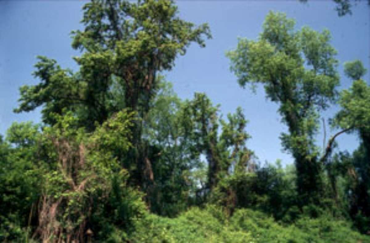 Naturschutzgebiet Ile de Rhinau