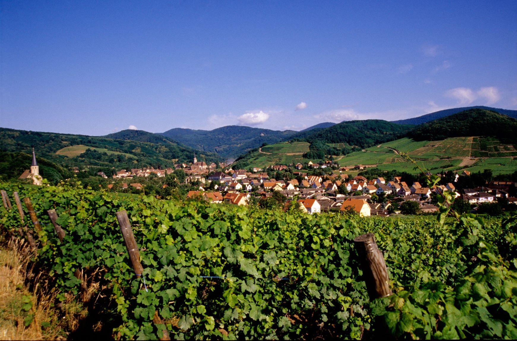 A vélo, sur la Route des Vins d'Alsace