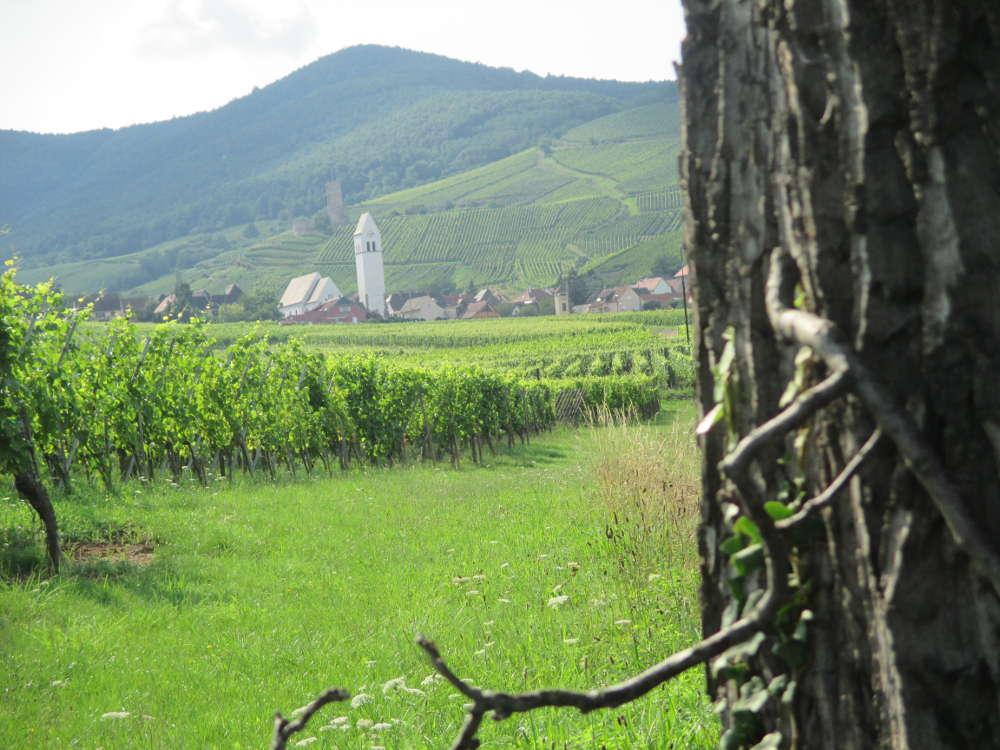Bain de nature vibratoire : entre vigne et forêt