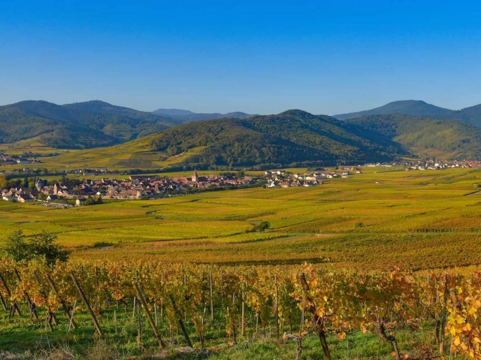 Mini-rallye - Découverte du vignoble et des vins