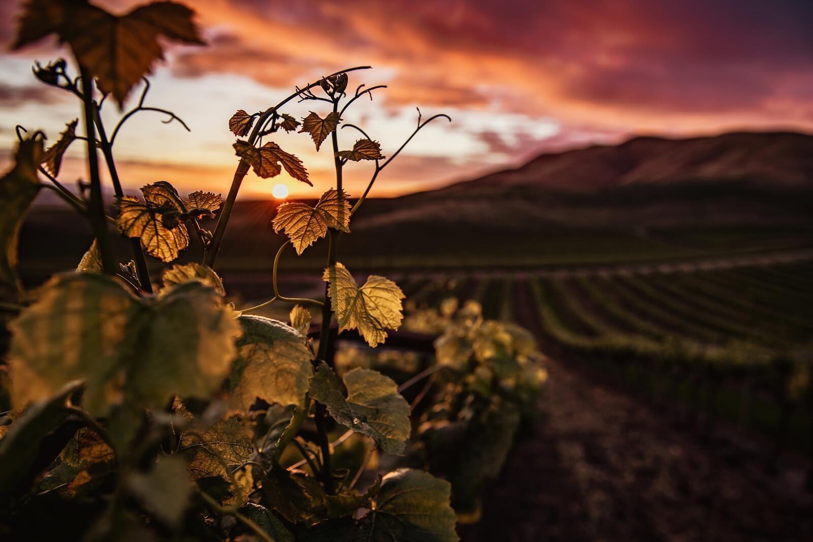 Sortie - Balade gourmande au crépuscule dans les vignes