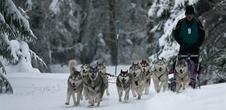 International sledgedog race