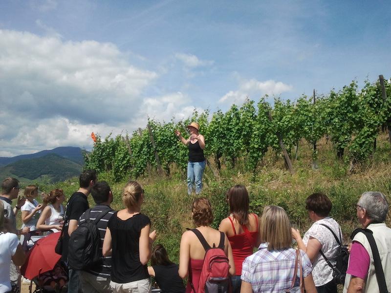 https://apps.tourisme-alsace.info/photos/kaysersberg/photos/decouverte-vigne-vin.jpg