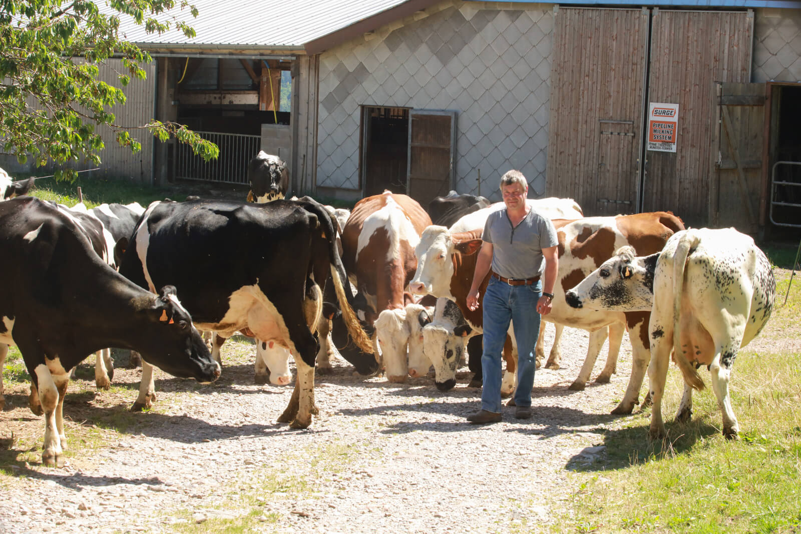 Farm of the Schoultzbach - Holiday accommodation at Justine