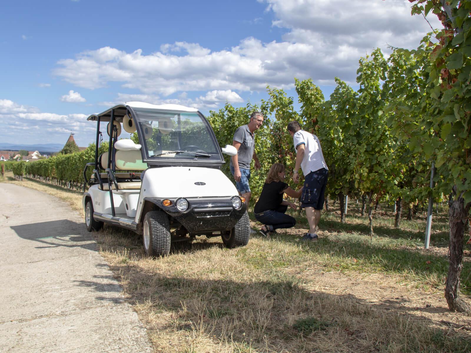 Promenade dans les vignes en voiturette électrique