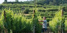 Visit our vineyards