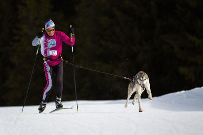 https://apps.tourisme-alsace.info/photos/kaysersberg/photos/trophee-federal-neige-ski-joering_1.jpg