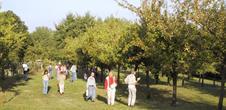 Plant fruit trees to preserve old apple varieties