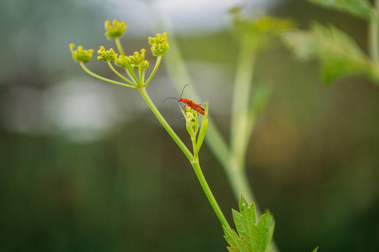Hymenoptera, le jardin écologique