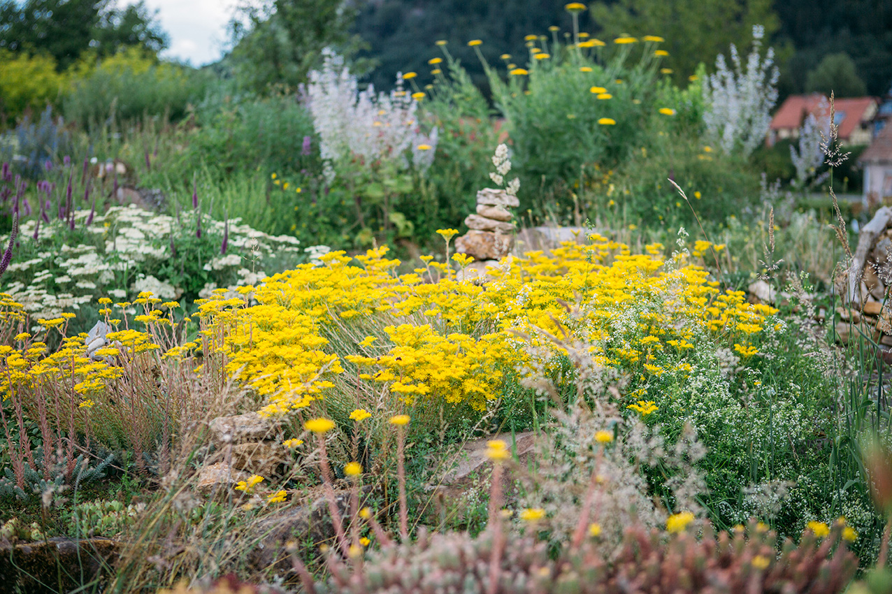 Visite guidée du jardin écologique Hymenoptera