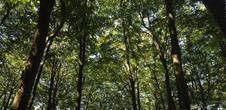 Une forêt fantastique