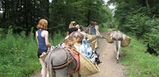 La nature au pas de l'âne