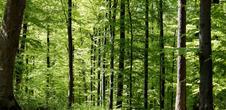Naturausflug Promenons-nous dans les bois