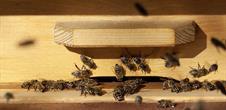 Visite de rucher