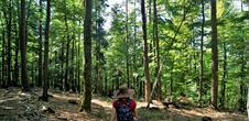 Sentier botanique et poétique du Seelberg