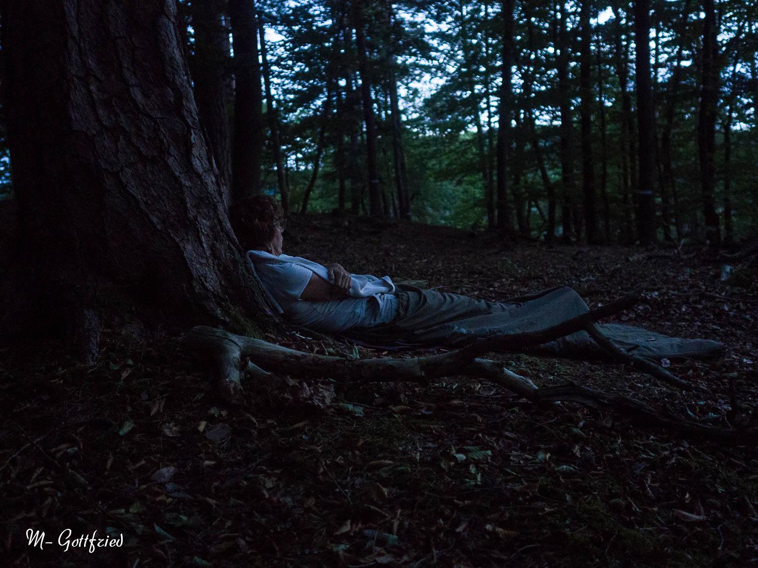 Bain de forêt nocturne