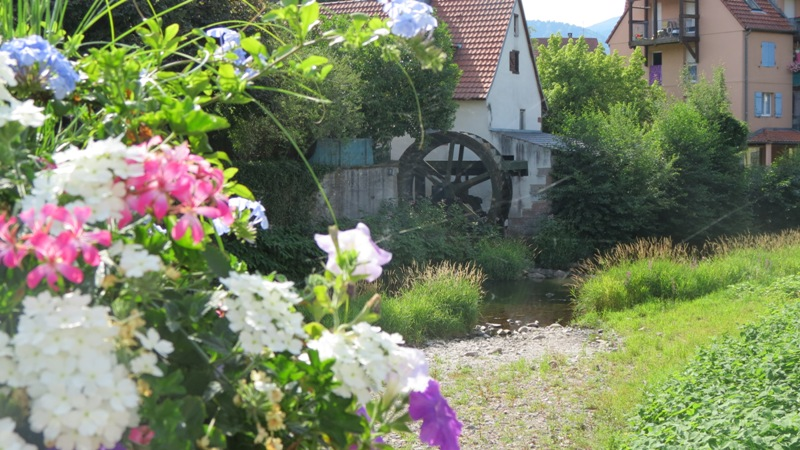 Masevaux, Flower town 4 flowers