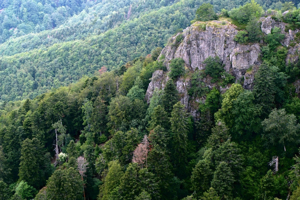 Nature reserve of the Forest of Volcanoes and Vogelsteine